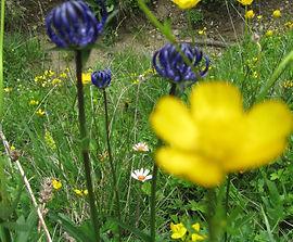Bachblüten Kalifornische Blüten Spirit-in-Nature