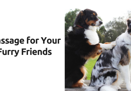 Massage for your Furry Friends