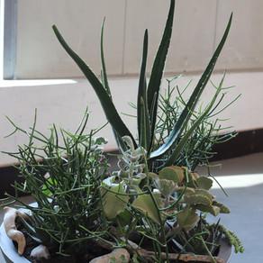 Die praktischen Abschlussprüfungen zum/-r Florist*in