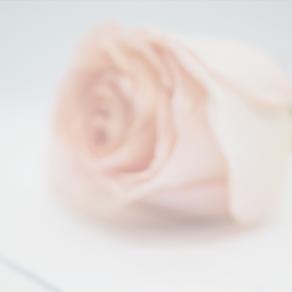 "Neuer Kurs ""Florist im Ausnahmefall"" startet mit           12 Teilnehmern am 5. 11. 2021"