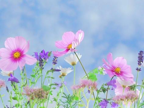 Blumengeschäfte wieder geöffnet