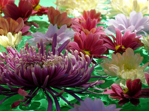 FDF-Flower Party im FloristPark – Floristik, Fun und Chrysanthemen