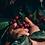 Thumbnail: MEXICO - Finca La Laja                                   TOFFEE & MILK CHOCOLATE