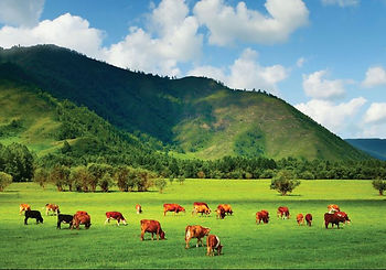 Pasture Fed Beef is a Good for You and Good for yor Concience
