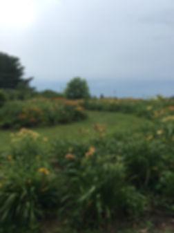 flower path (1).jpg