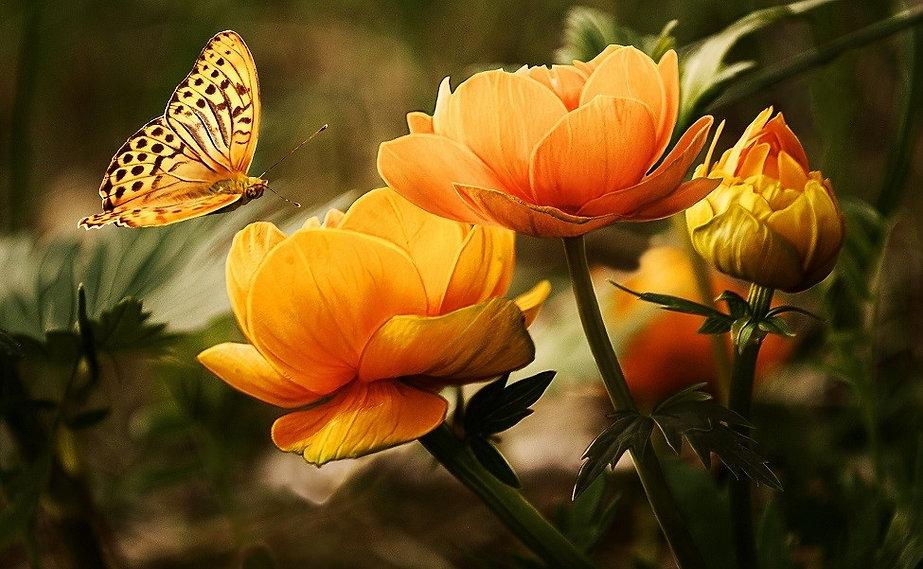 flowers-19830_980 (2).jpg