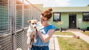 Noise Control Engineering and Design Considerations for Animal Care Facilities