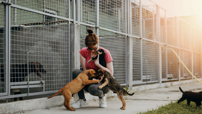 4 Key Aspects to the Plumbing System of a Veterinary Hospital or Animal Shelter