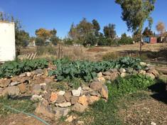 קורס גידול ירקות בגינה הביתית