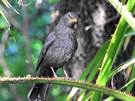 קורס שפת הציפורים