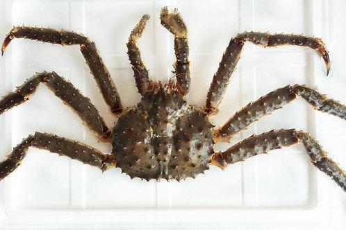 阿拉斯加長腳紅蟹 約4-4.5斤