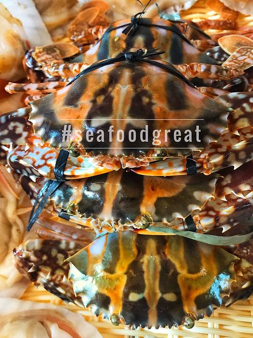 紅花蟹 (10-12両)(每隻)