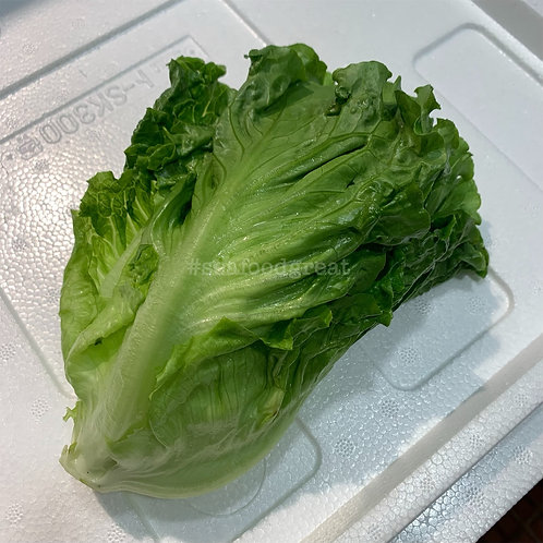 唐生菜 (兩棵 / 約半斤)