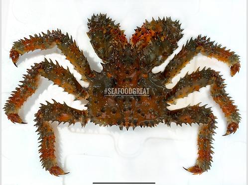 日本花咲蟹 - 1斤2-6両 (每隻)
