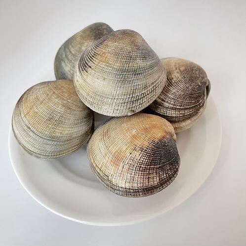 包子螺 (約2両)(每隻)