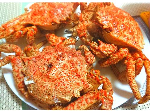 日本栗子蟹 12-14両 (隻) - 節日