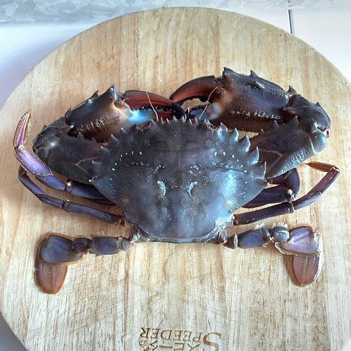 青肉蟹 - 約12-14両 (每隻)