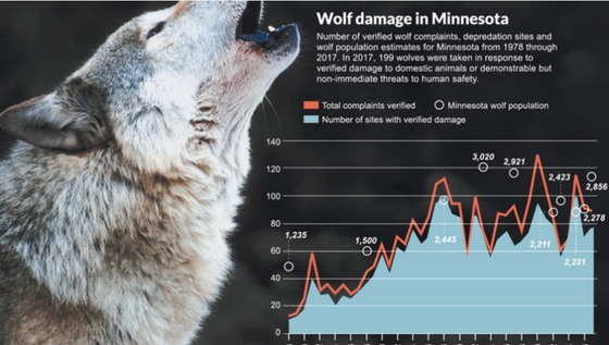 Species in Conflict: Minnesota wolf management follows bumpy path on road to recovery