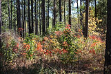 11-25-14 Forest Colors Forestry.jpg