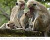 3 hopeful stories for endangered species