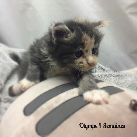 Olympe9.jpg