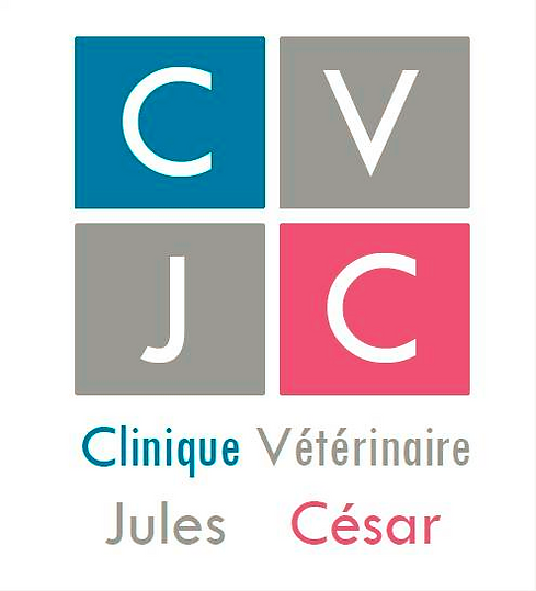 Clinique veterinaire Maine Coon