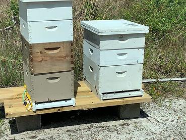 Bees.jfif