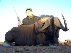 21 Wildebeest Africa