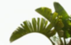 Tree%252520Leaves_edited_edited_edited.jpg