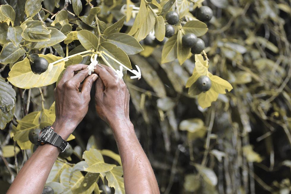 picking fruit.jpg