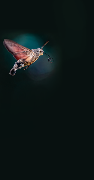 moth_mobile_bg.png