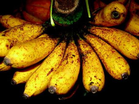 Turban Banana