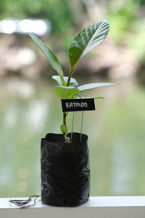 Katmon