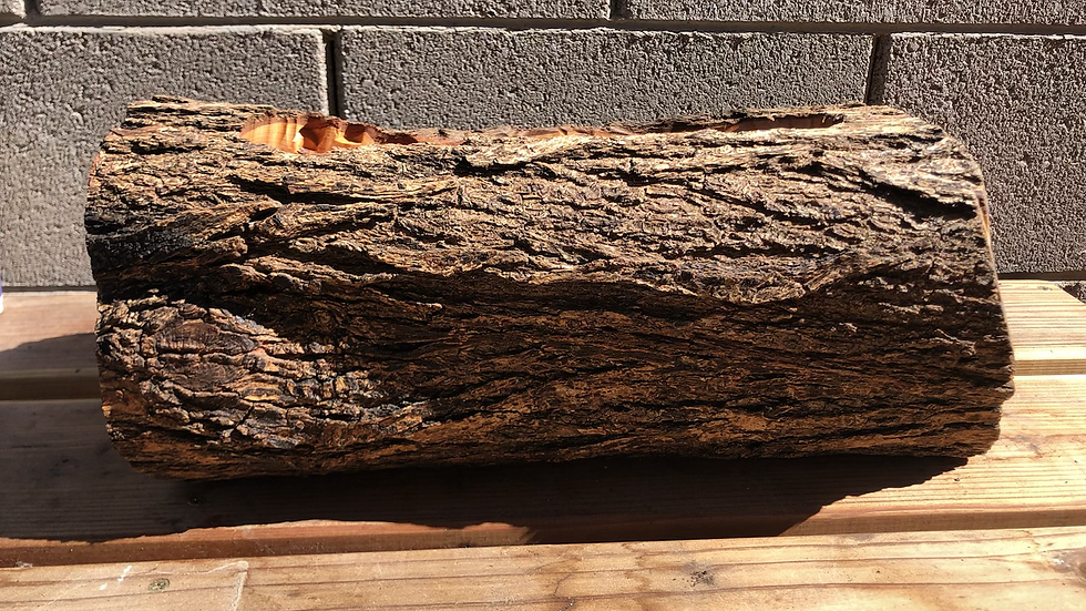 Empty Bradford Pear Log Planter