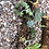Thumbnail: Joshua Tree Log with Live Succulents