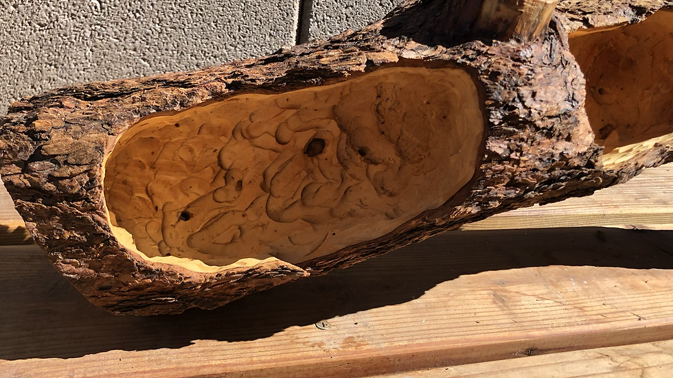 Y Shaped Large Pine Tree log planter