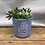 Thumbnail: Blue repurposed canister with live succulents
