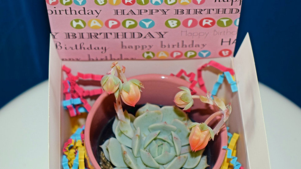 Gift Box with succulent