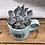 Thumbnail: Blue Mind's Eye Mug with Succulent