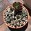 Thumbnail: Flapjack Cactus Garden
