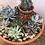 Thumbnail: Beaded cactus and succulent garden pot