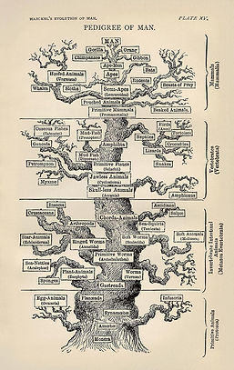 Tree_of_life_by_Haeckel.jpg