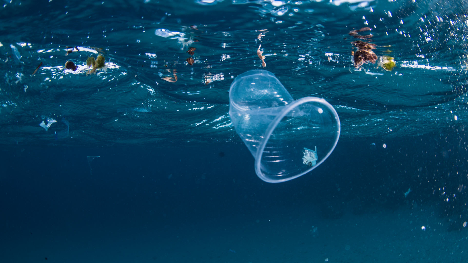 plastic pollution  underwater diving  conservation egypt