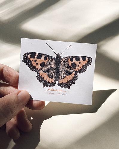 adesivo borboleta médio