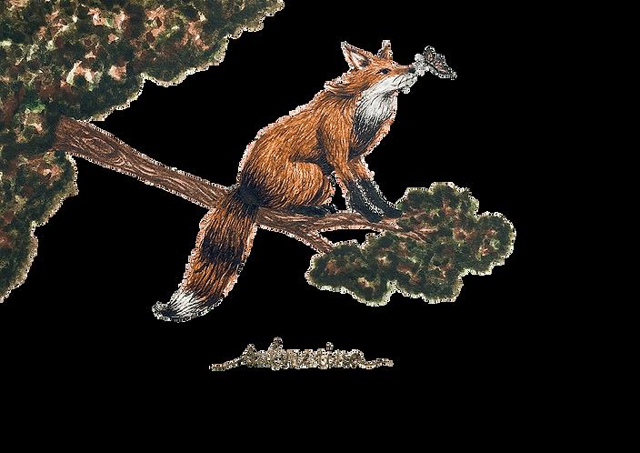raposa e borboleta