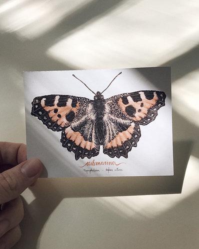 adesivo borboleta grande