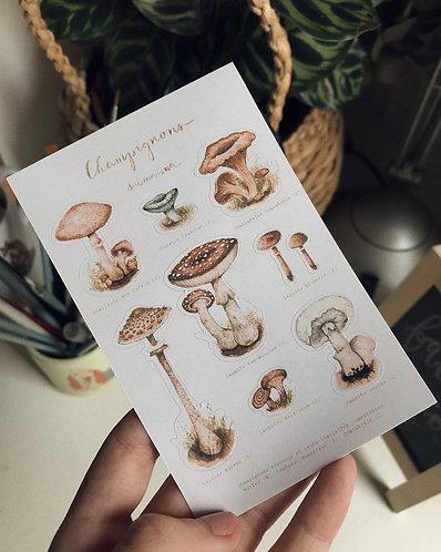 cartela de adesivos champignons