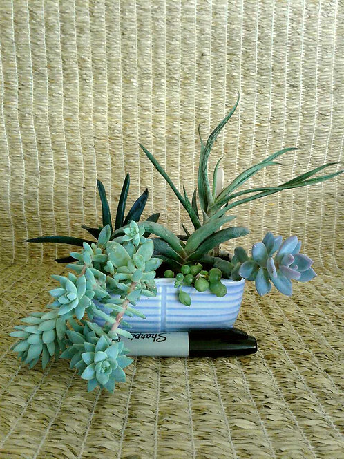 Succulents in Lavender Planter #2 | NW Phoenix
