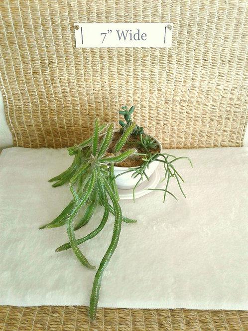 Dogtail Cactus Succulent Bowl | Potted Succulent Garden