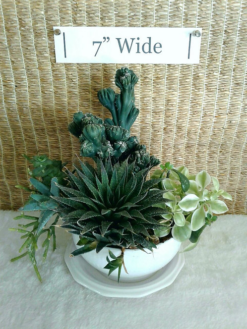Succulents in Textured White Bowl | Potted Garden
